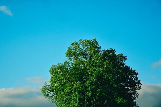 tree-932202_640